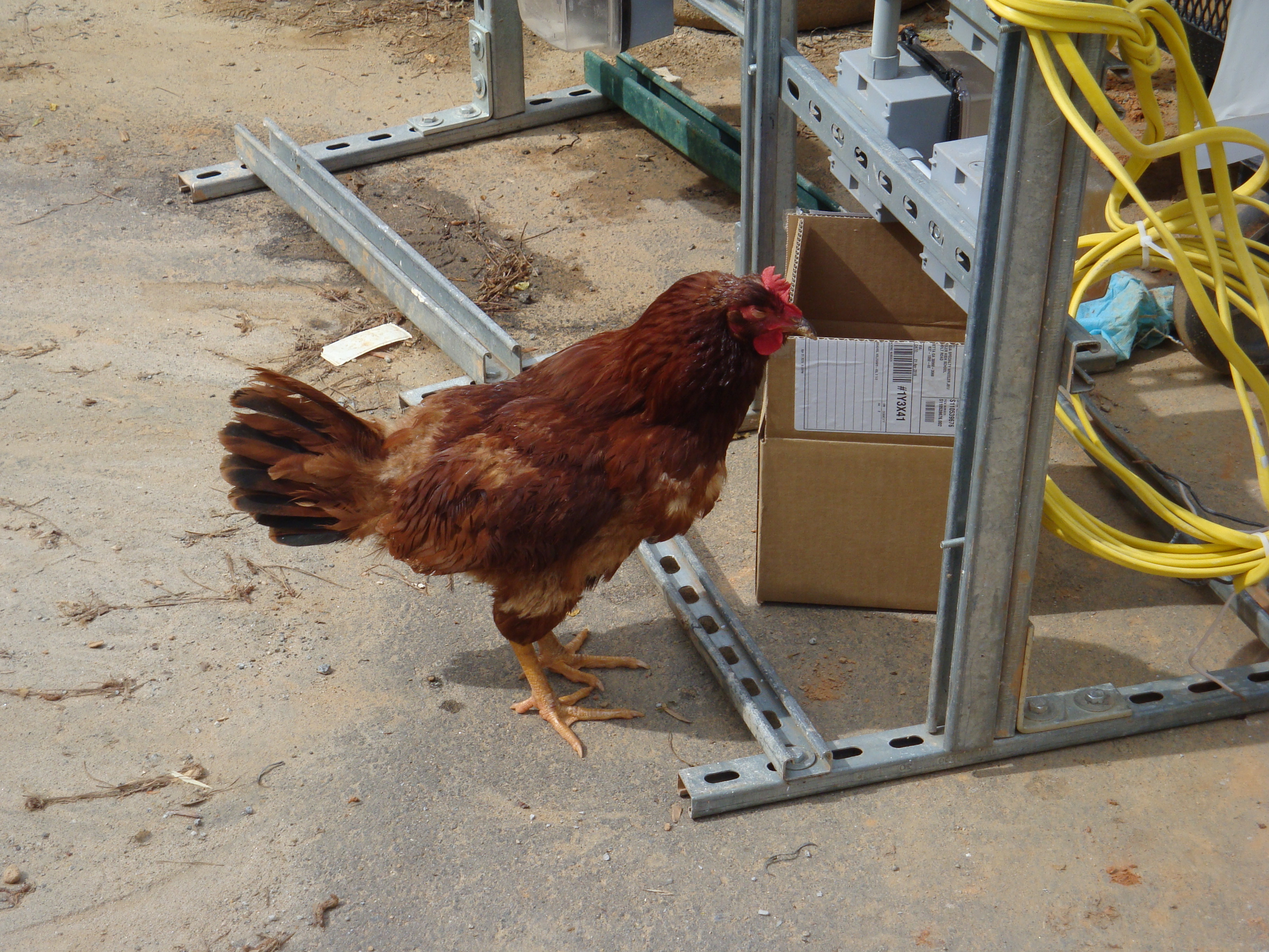 Chicken Electrical Inspector